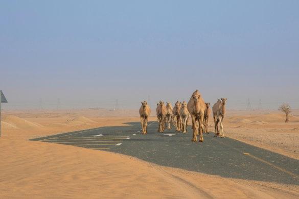 Dubai Travel Planner Border Crossings