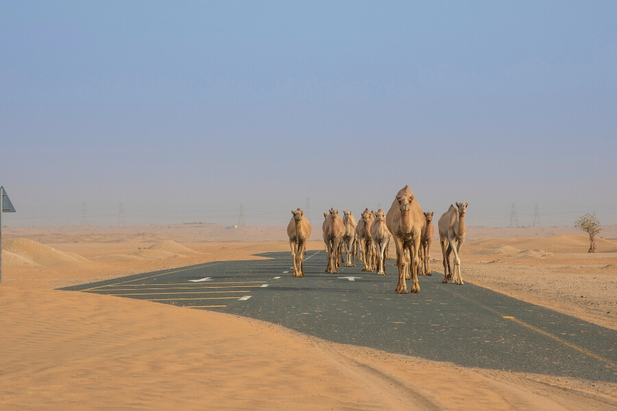 Dubai Travel Planner Border Crossings